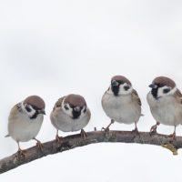 「すずめ」は、珍しい鳥と言う事を知ってますか?